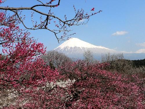 Fujisan1_1